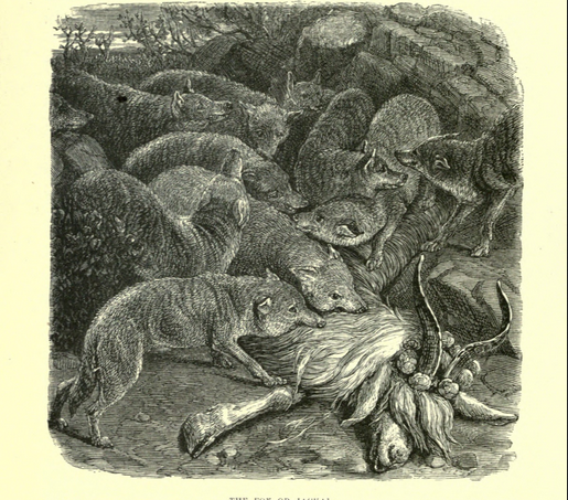Fox illustration from Wood's Bible Animals