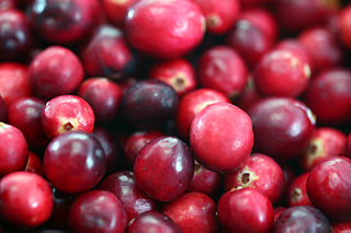 cranberries grown and harvested in Massachusetts